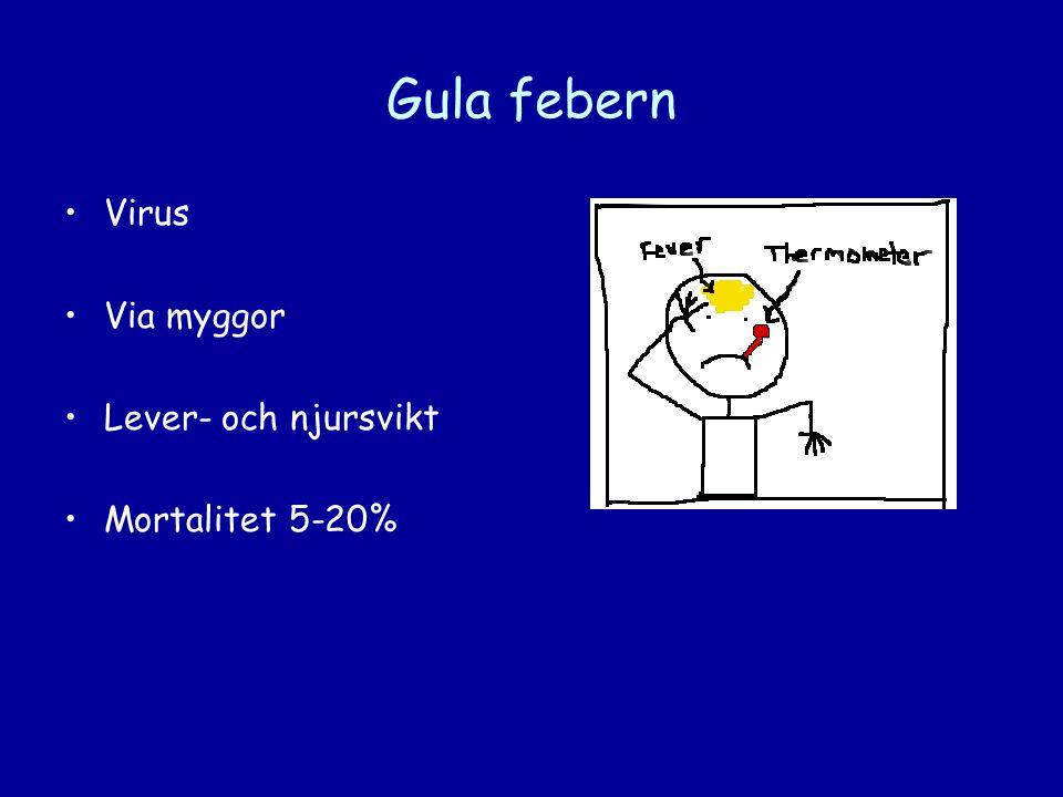 Gula febern Virus Via myggor Lever- och njursvikt Mortalitet 5-20%
