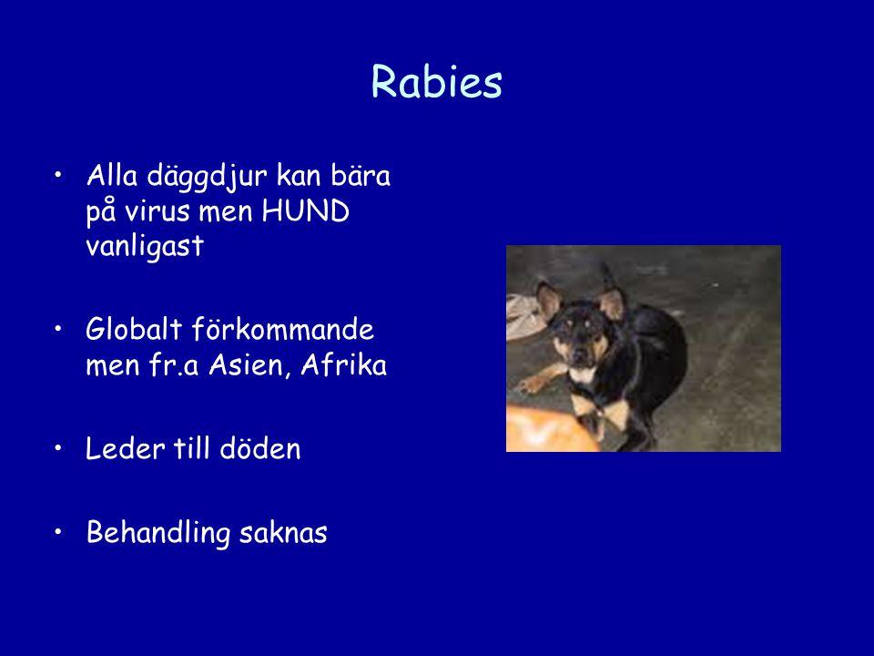 Rabies Alla däggdjur kan bära på virus men HUND vanligast
