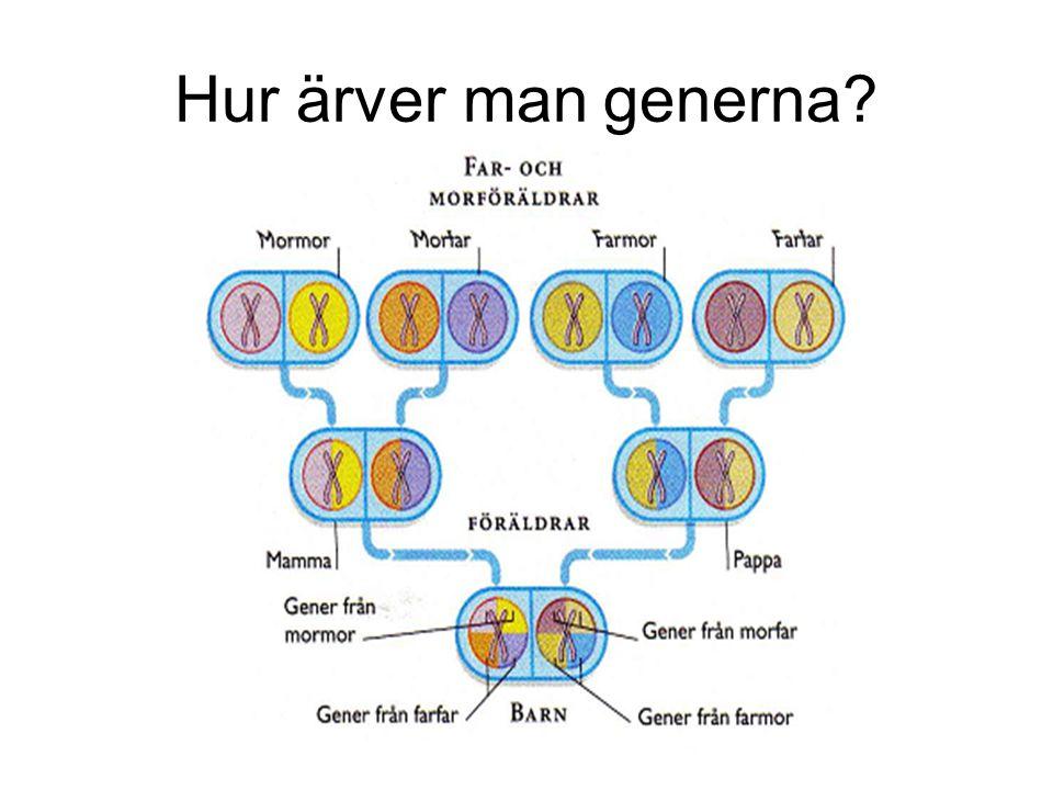 Hur ärver man generna