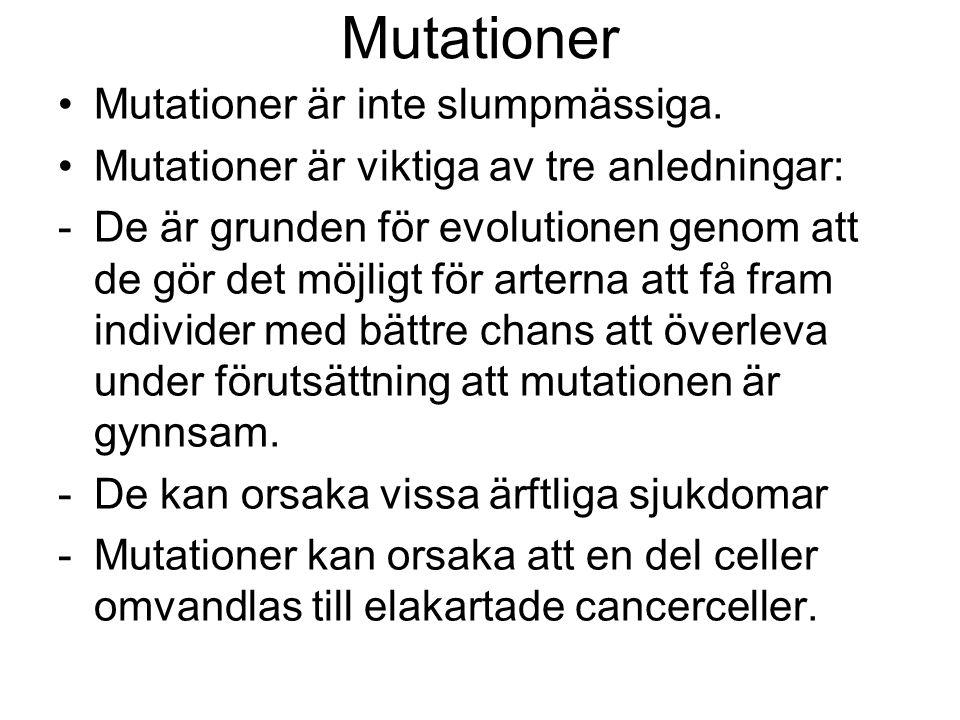 Mutationer Mutationer är inte slumpmässiga.