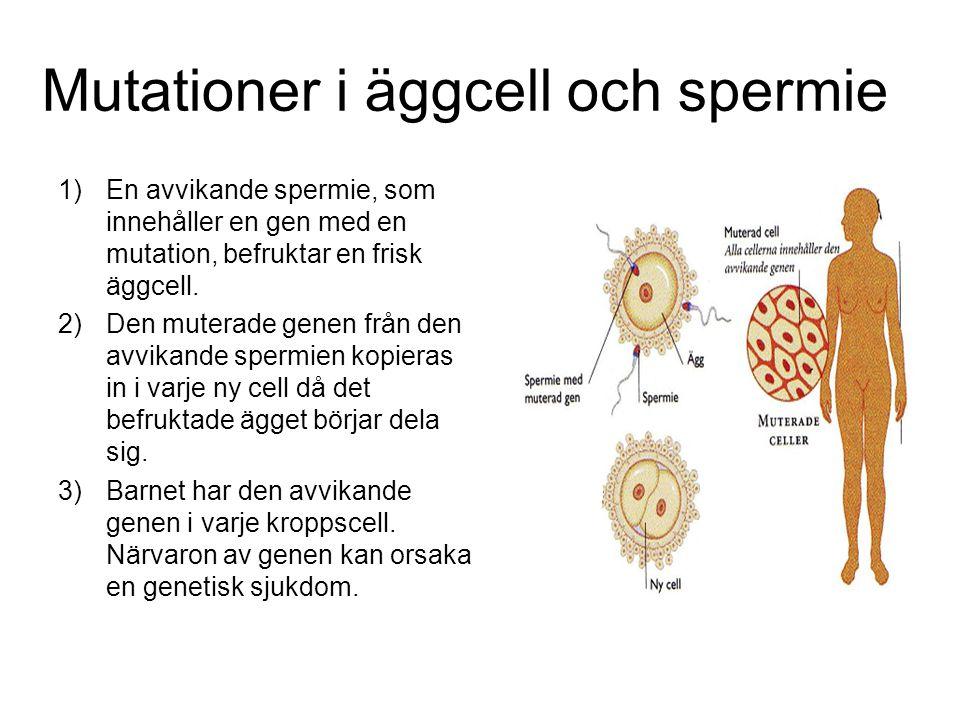 Mutationer i äggcell och spermie