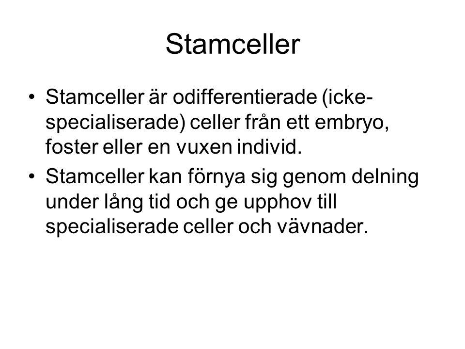 Stamceller Stamceller är odifferentierade (icke- specialiserade) celler från ett embryo, foster eller en vuxen individ.