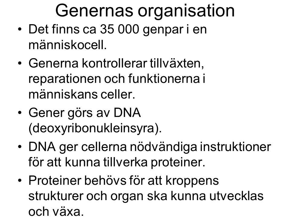 Genernas organisation