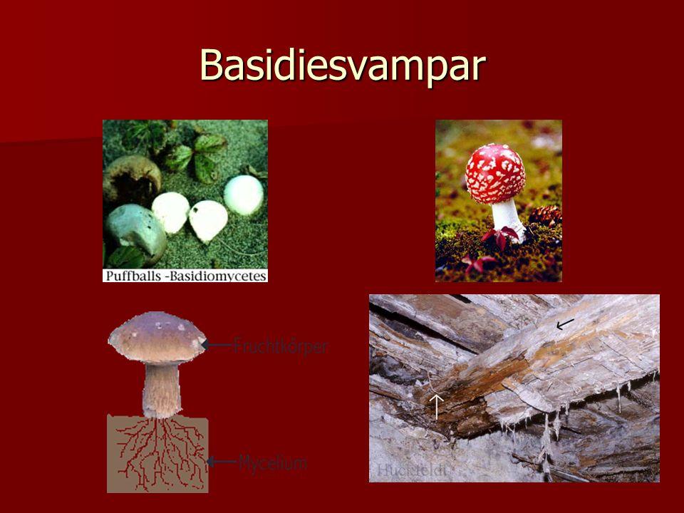 Basidiesvampar