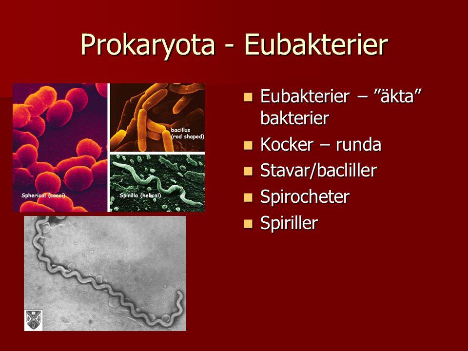 Prokaryota - Eubakterier