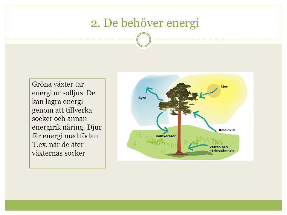 2. De behöver energi