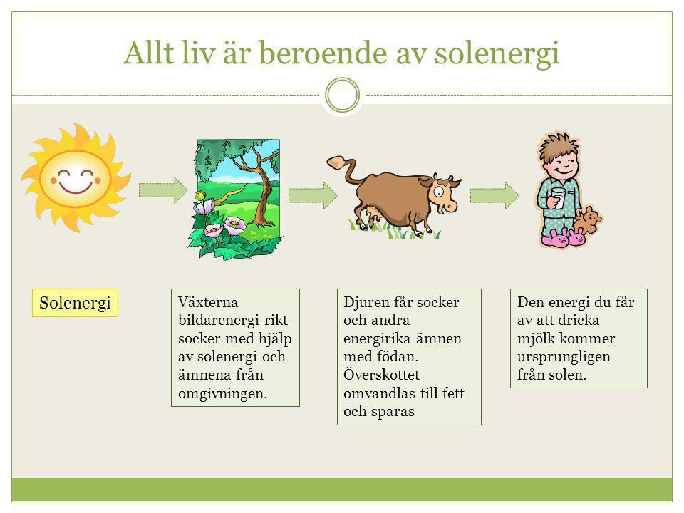 Allt liv är beroende av solenergi