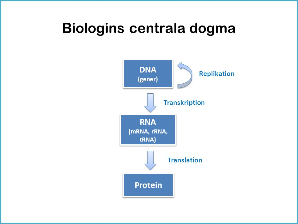 Biologins centrala dogma