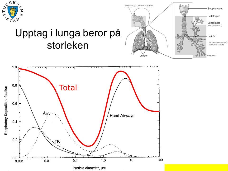 Upptag i lunga beror på storleken