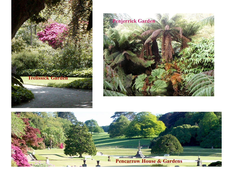 Penjerrick Garden Trelissick Garden Pencarrow House & Gardens