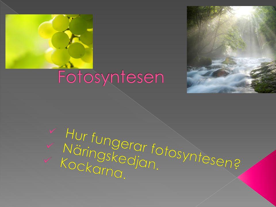 Hur fungerar fotosyntesen Näringskedjan. Kockarna.
