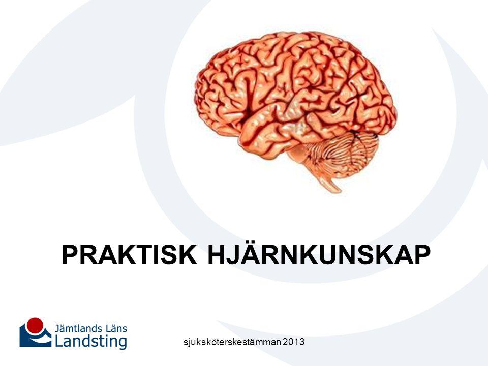 Praktisk hjärnkunskap