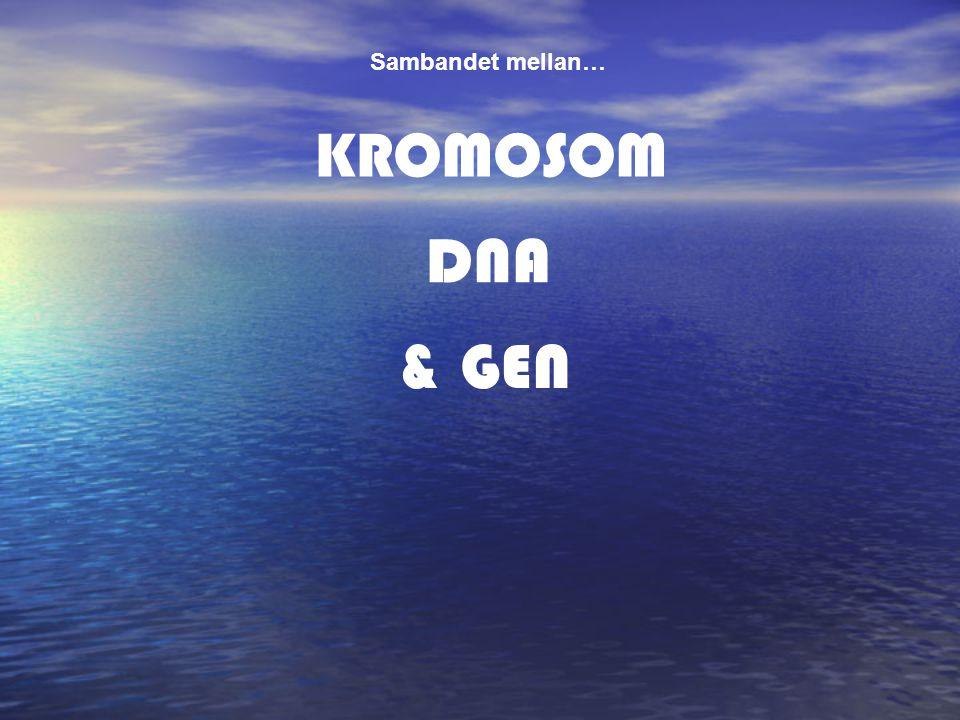 Sambandet mellan… KROMOSOM DNA & GEN