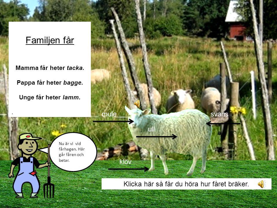 Klicka här så får du höra hur fåret bräker.
