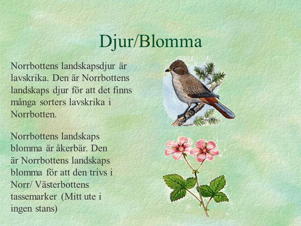 Djur/Blomma Norrbottens landskapsdjur är lavskrika. Den är Norrbottens landskaps djur för att det finns många sorters lavskrika i Norrbotten.