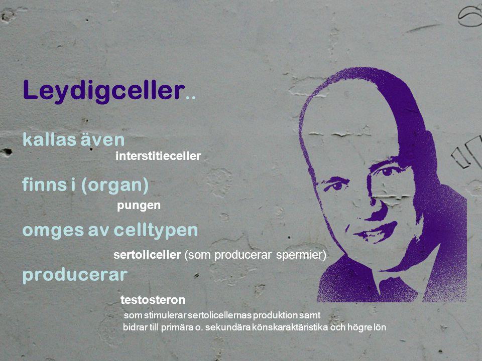 Leydigceller.. kallas även finns i (organ) omges av celltypen producerar