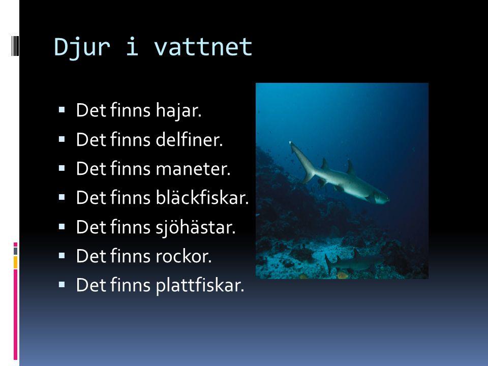 Djur i vattnet Det finns hajar. Det finns delfiner. Det finns maneter.
