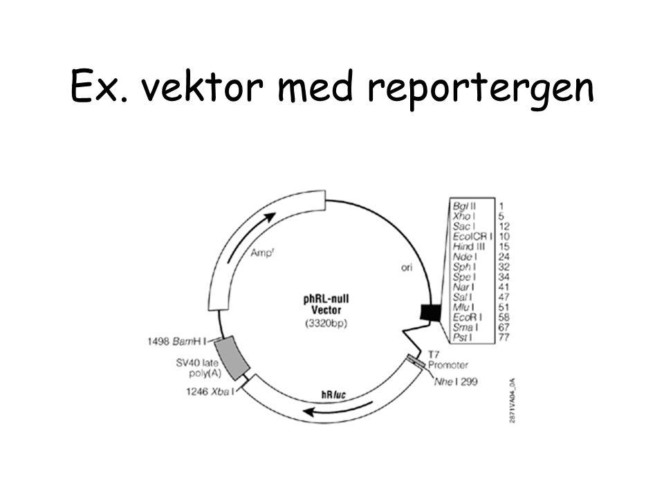Ex. vektor med reportergen