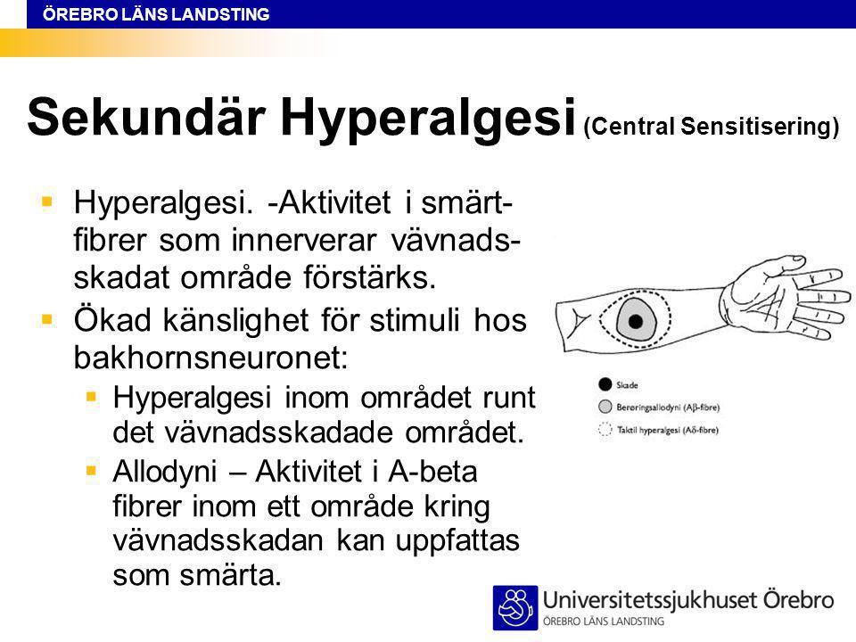 Sekundär Hyperalgesi (Central Sensitisering)
