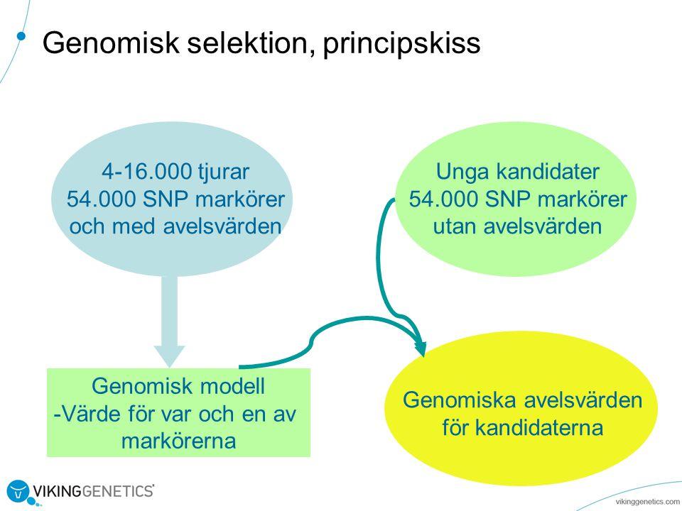 Genomiska avelsvärden