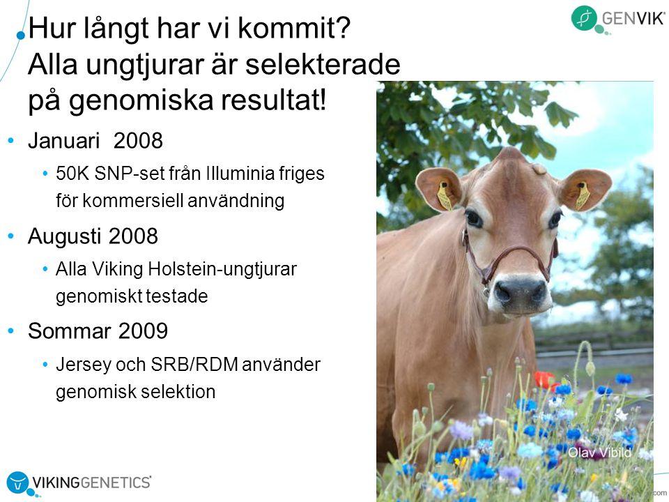 Hur långt har vi kommit Alla ungtjurar är selekterade på genomiska resultat!