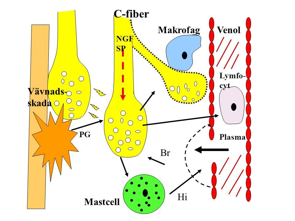 C-fiber Makrofag Venol Vävnads-skada Br Hi Mastcell NGF SP Lymfo-cyt