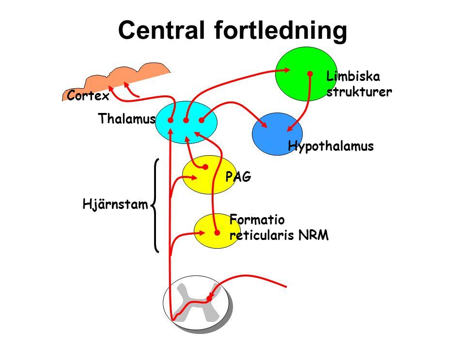 Central fortledning Limbiska strukturer Cortex Thalamus Hypothalamus