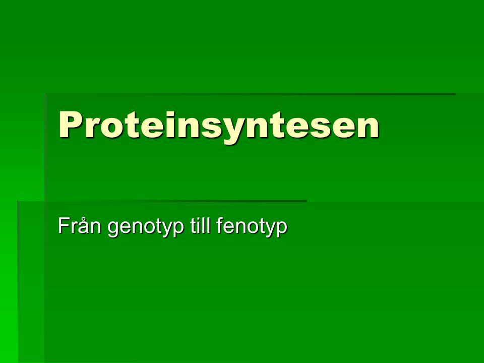 Från genotyp till fenotyp