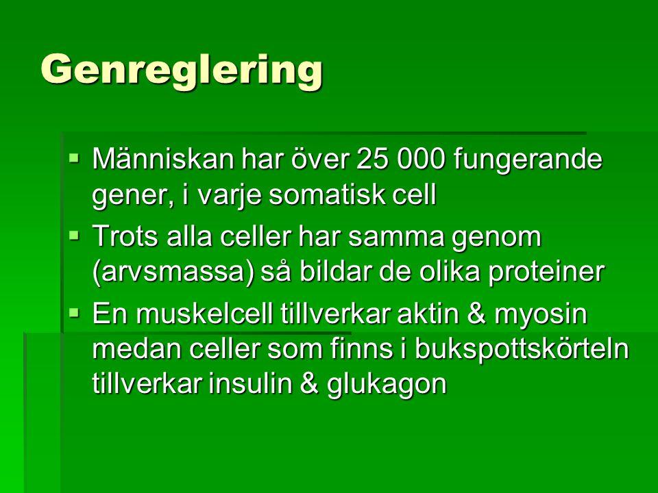Genreglering Människan har över 25 000 fungerande gener, i varje somatisk cell.