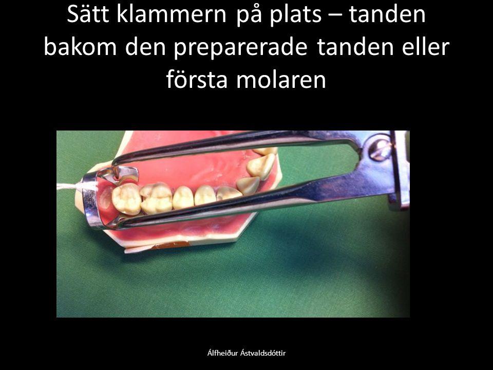 Álfheiður Ástvaldsdóttir