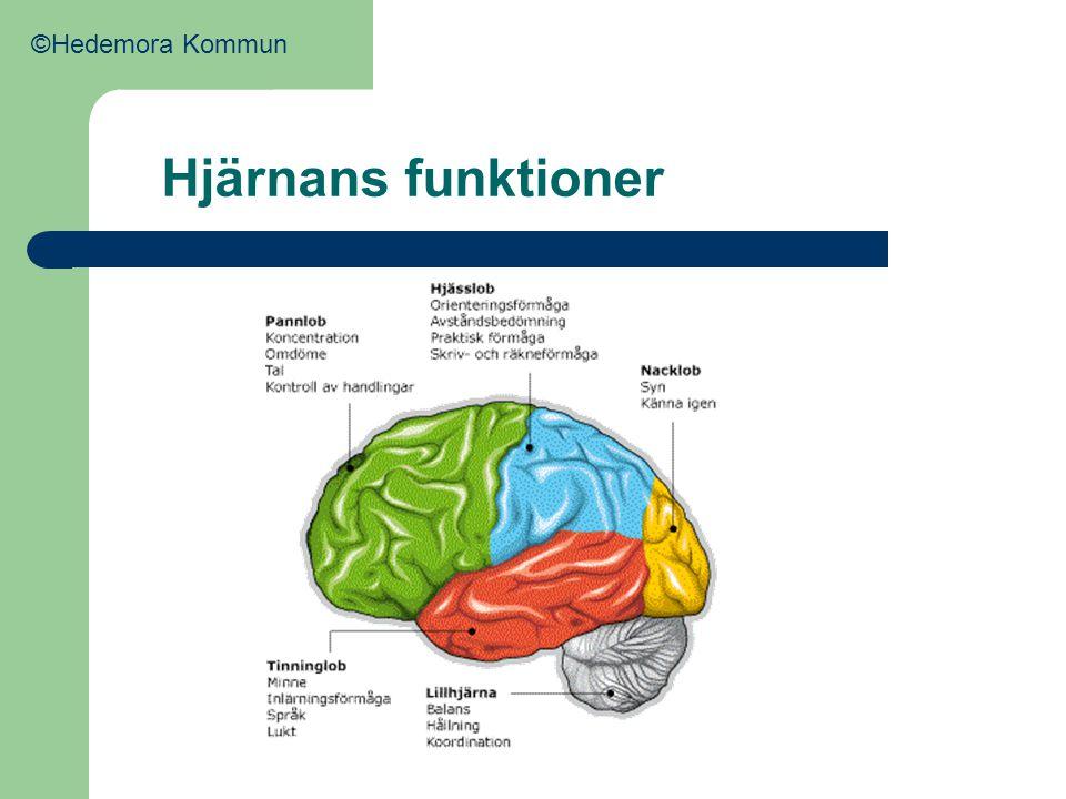 ©Hedemora Kommun Hjärnans funktioner Olika funktioner i hjärnan.