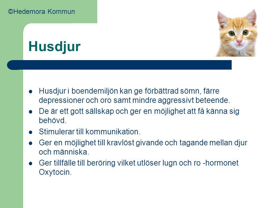 ©Hedemora Kommun Husdjur. Husdjur i boendemiljön kan ge förbättrad sömn, färre depressioner och oro samt mindre aggressivt beteende.