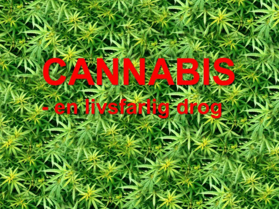 CANNABIS - en livsfarlig drog