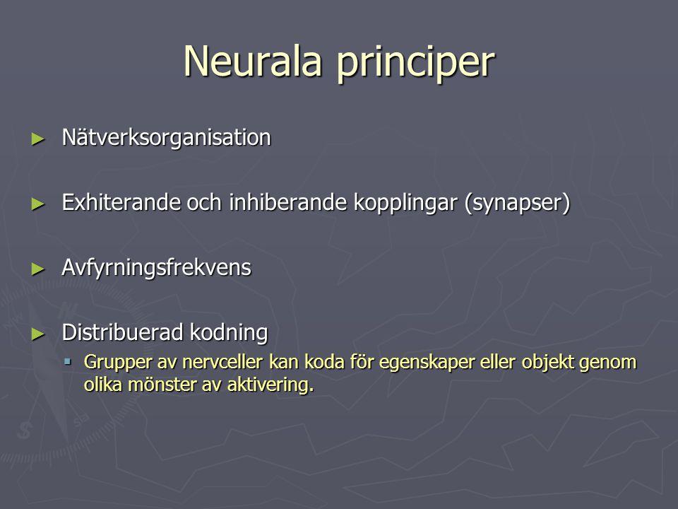 Neurala principer Nätverksorganisation