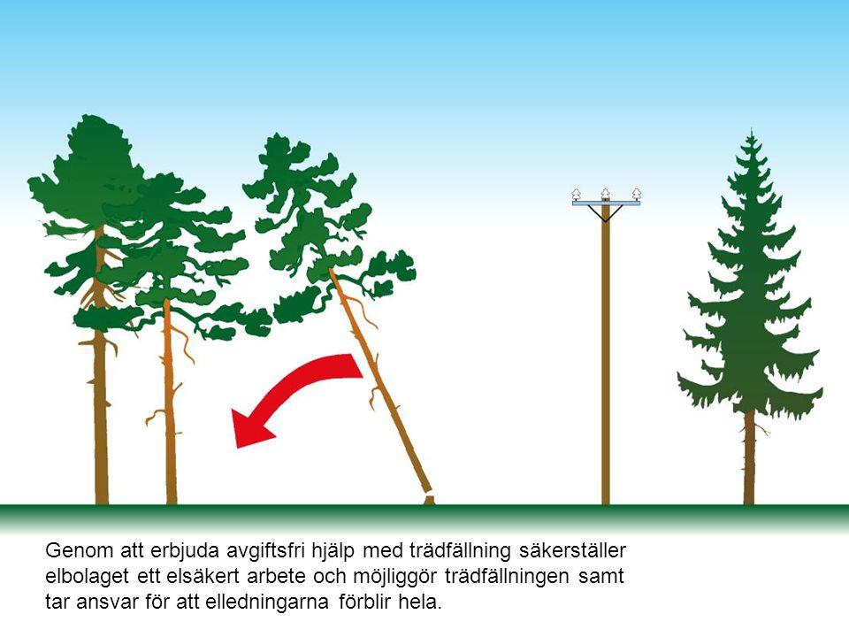 Genom att erbjuda avgiftsfri hjälp med trädfällning säkerställer