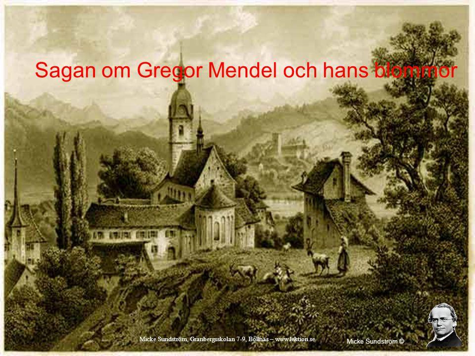 Sagan om Gregor Mendel och hans blommor