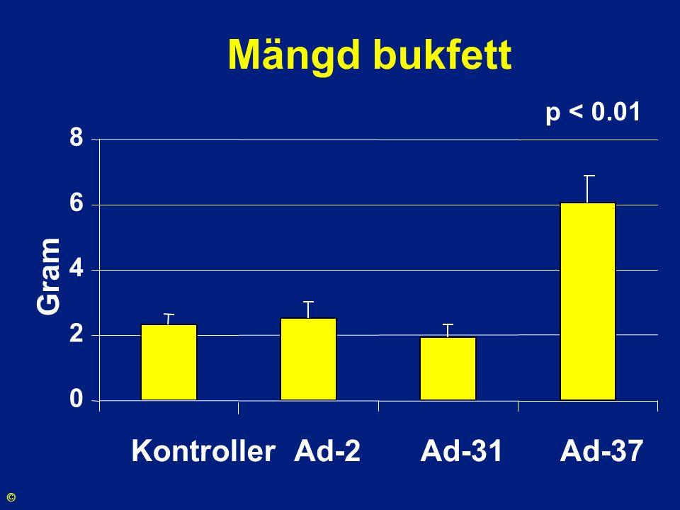 Mängd bukfett p < 0.01 2 4 6 8 Gram Kontroller Ad-2 Ad-31 Ad-37 ©