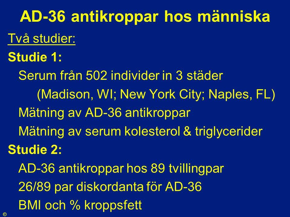 AD-36 antikroppar hos människa