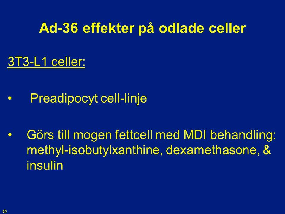 Ad-36 effekter på odlade celler