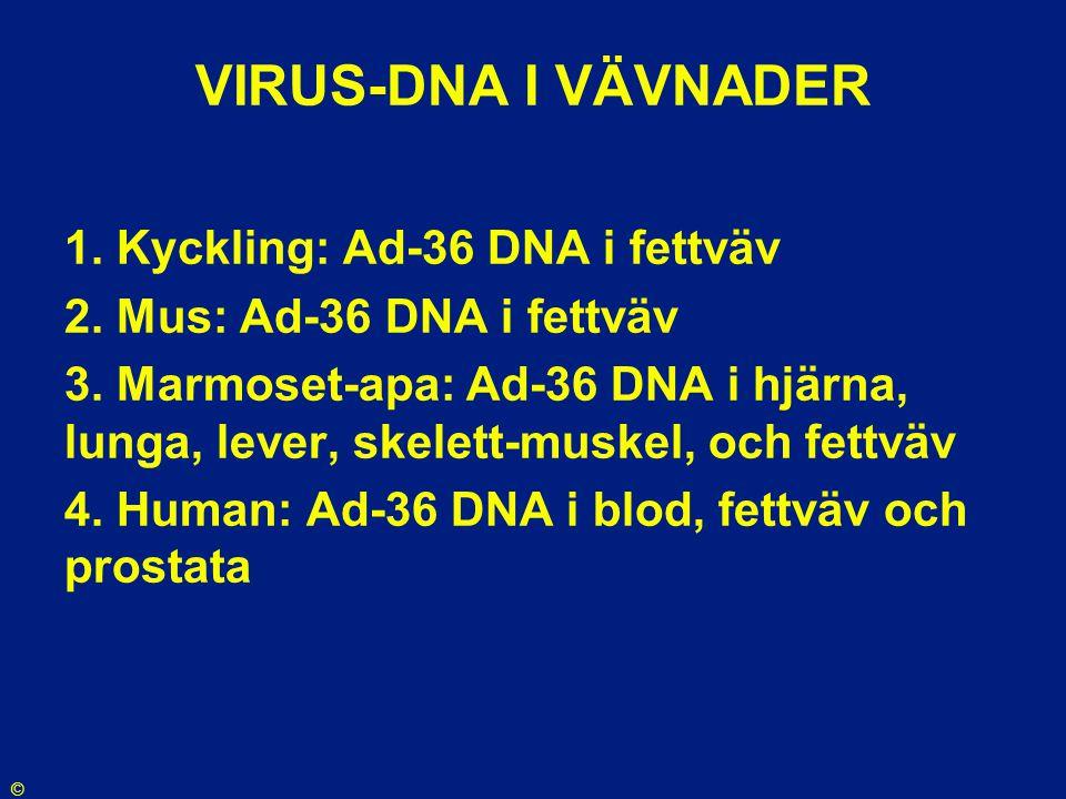 VIRUS-DNA I VÄVNADER 1. Kyckling: Ad-36 DNA i fettväv