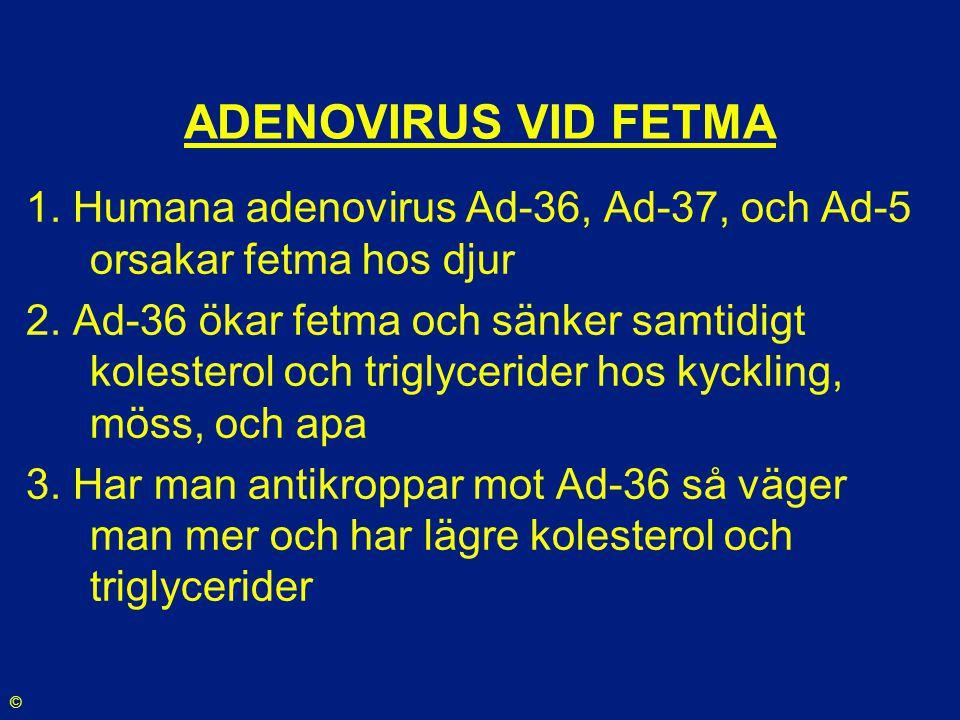 ADENOVIRUS VID FETMA 1. Humana adenovirus Ad-36, Ad-37, och Ad-5 orsakar fetma hos djur.