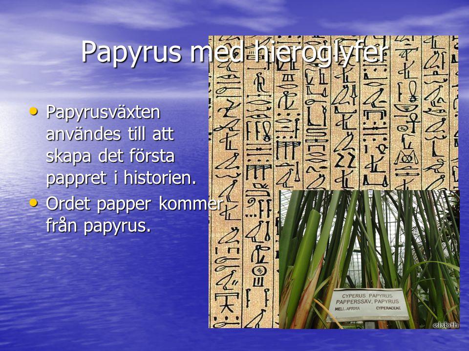 Papyrus med hieroglyfer