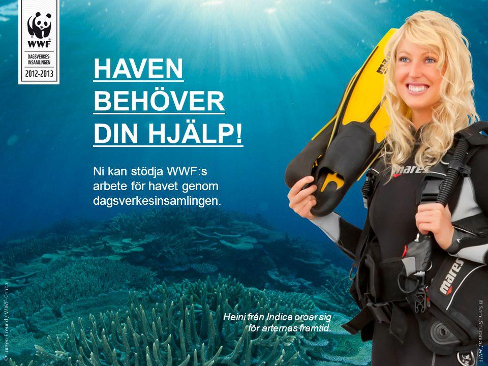 HAVEN BEHÖVER DIN HJÄLP! Ni kan stödja WWF:s