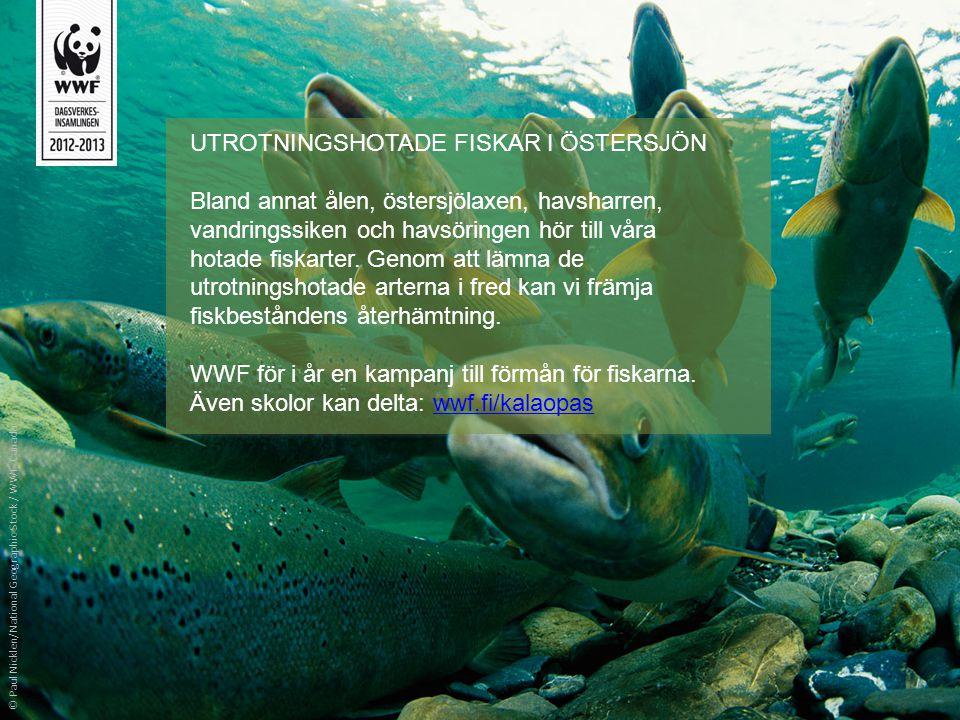 UTROTNINGSHOTADE FISKAR I ÖSTERSJÖN