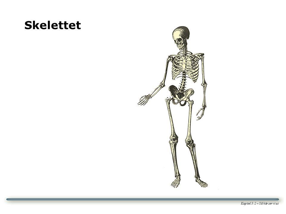 Skelettet Kapitel 3:2 – Så här ser vi ut