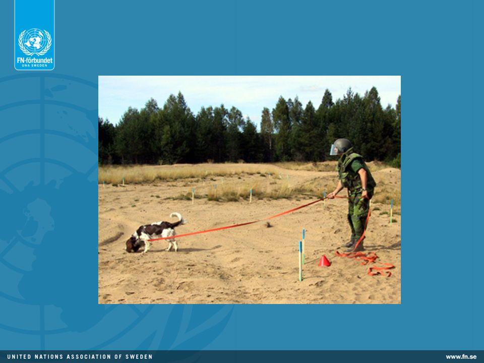 Hundar är fem gånger snabbare än människor