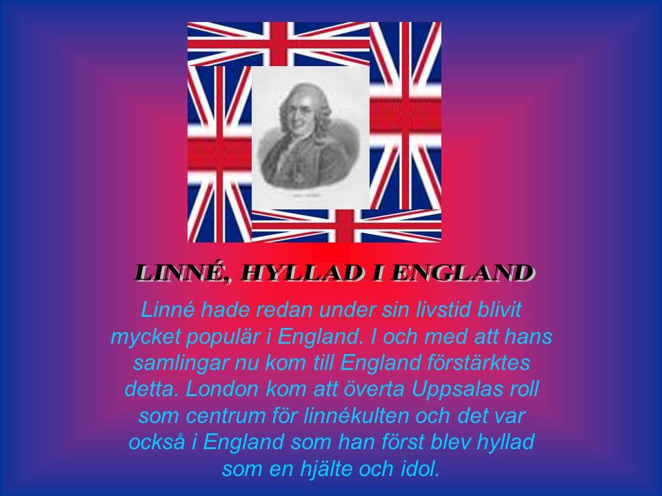 LINNÉ, HYLLAD I ENGLAND