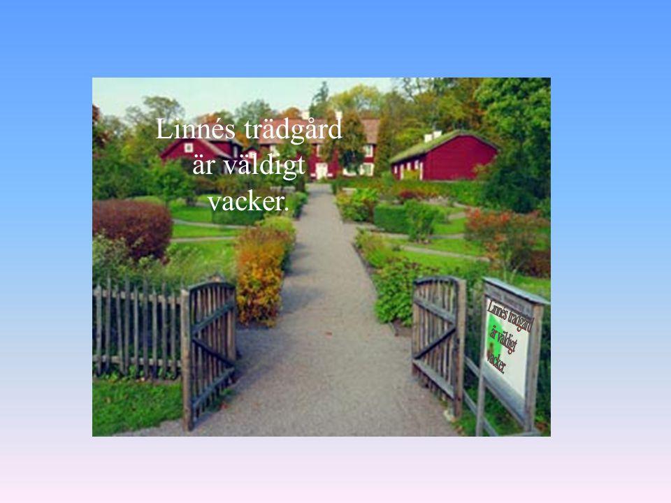 Linnés trädgård är väldigt vacker.