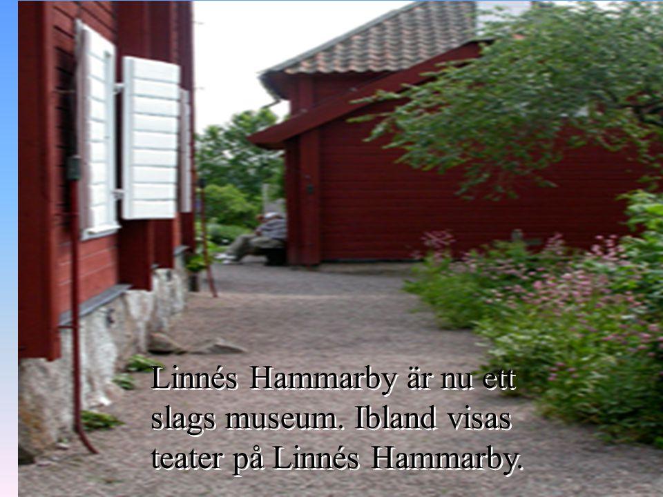 Linnés Hammarby är nu ett slags museum