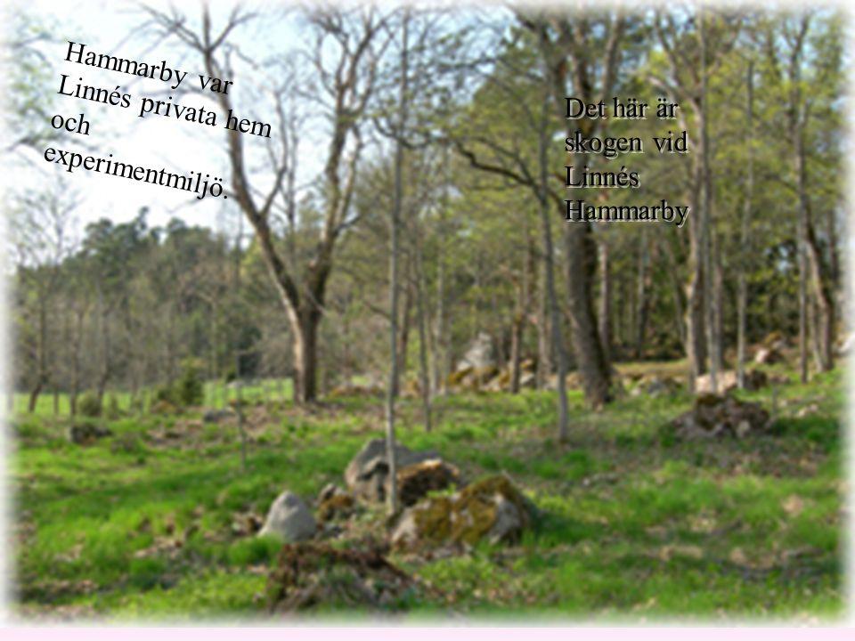 Hammarby var Linnés privata hem och experimentmiljö.